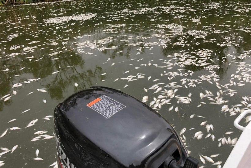 Austraalias hukkusid sajad tuhanded jõekalad