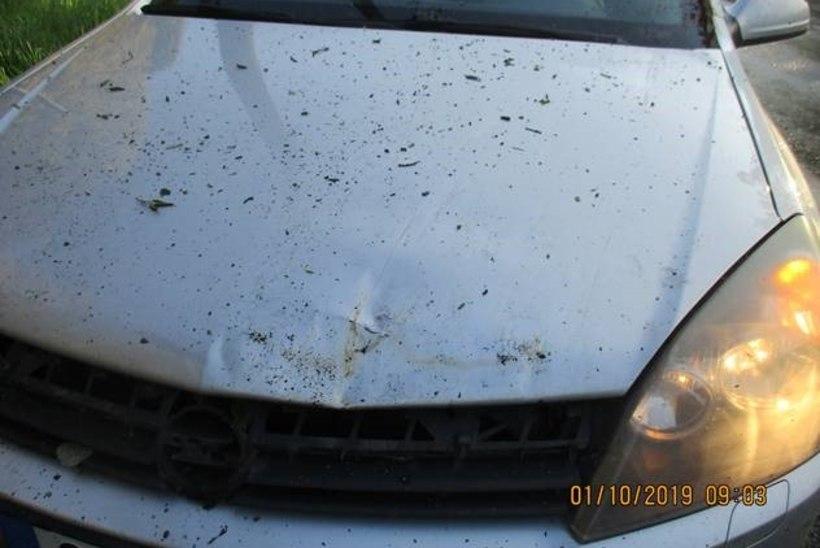 FOTOD | Tormituul paiskas puu auto kapotile
