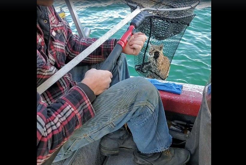 VIDEO | Kalamehed püüdsid järvest ilvese