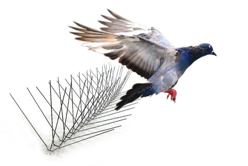Rõdu on lindude väljaheiteid täis? Kajakad kisavad akna taga? Siit saad nõu, kuidas linde peletada