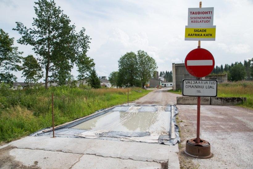 Eesti sigalad pole kaks aastat katku näinud