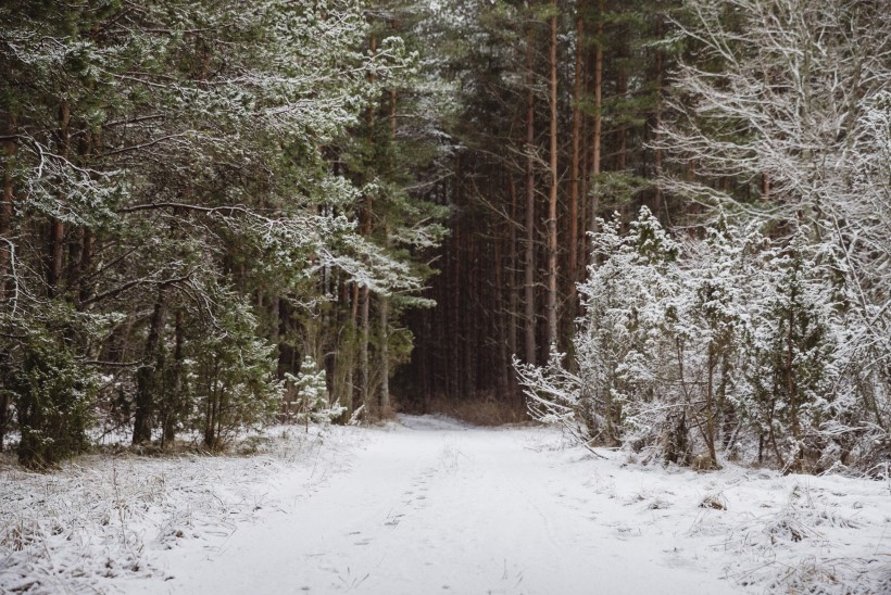 Tõnis Erilaiu lehesaba | Kuidas Metsa Mari elas Alutaguse põlislaanes