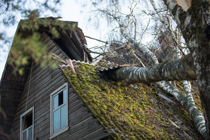 GALERII | Tormituulte tagajärjed: Setomaal kukkusid puud majade peale, esmaspäeva õhtul oli elektrita veel ligi 15 000 majapidamist