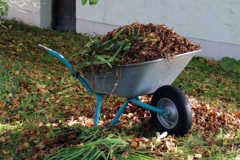 AED | Tee neid aiatöid novembris!