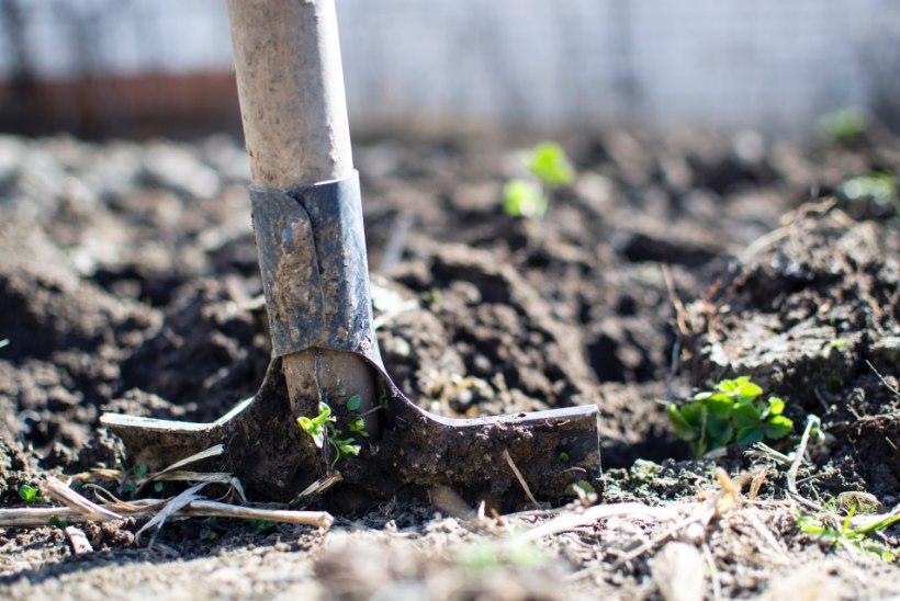 AED | Hädavajalikud aiatööd oktoobris