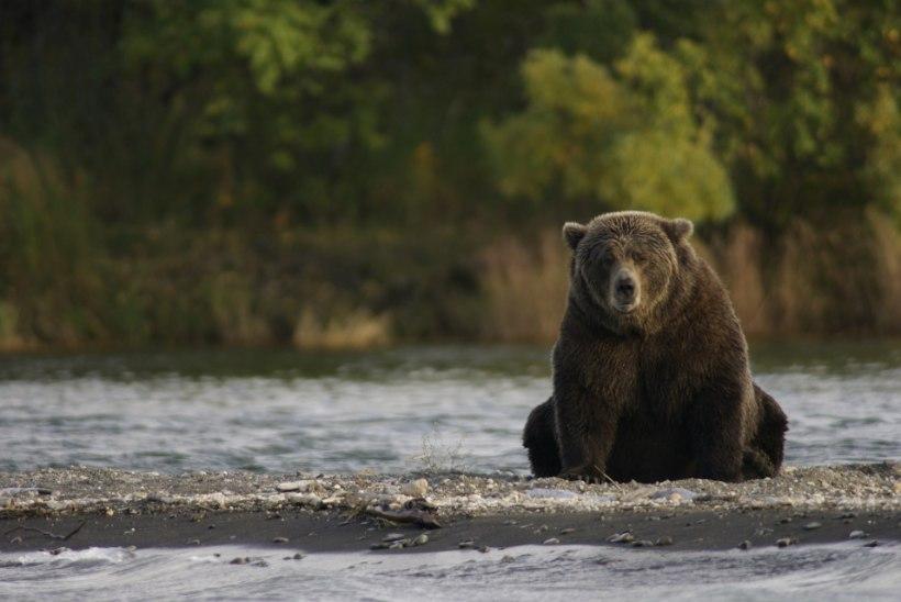 Haruldane kaader: fotograaf jäädvustas pahaaimamatud kalamehed, keda luuras võimas karu