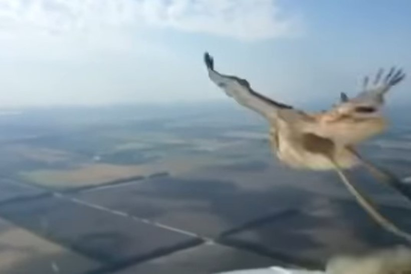 VIDEO | Lennuki kokkupõrge linnuga ehmatas pilooti
