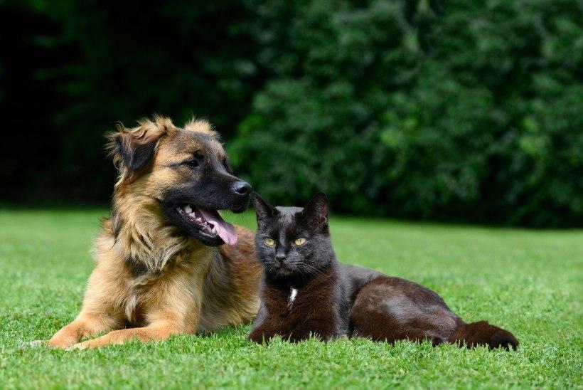 Super-premium loomatoit hoiab sinu lemmiku terve ja rõõmsana!
