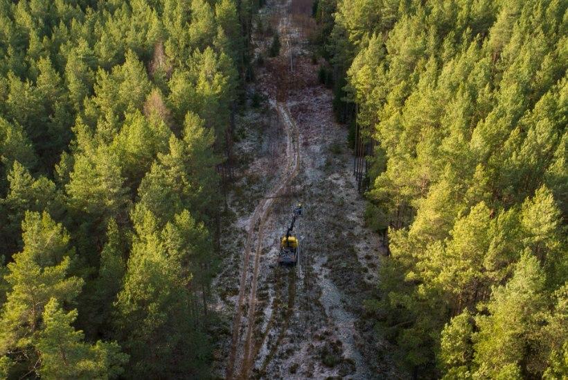 Elektrilevi kõrvaldab täna Lõuna-Eestis kõige raskemaid tormikahjustusi