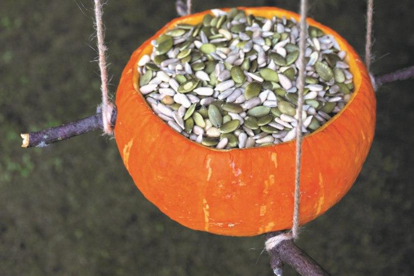 Hoopis praktilisem kõrvitsakasutus: meisterda küünlaalus või lindude sööginõu