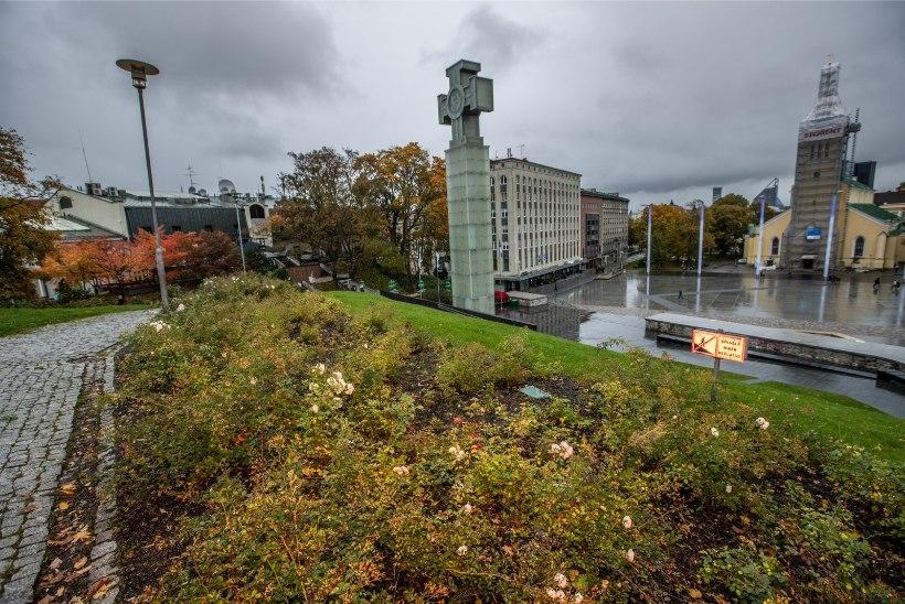 GALERII | Tallinna konnasilm: kas ohakatesse kasvanud võidusamba haljastus tuleb täiesti ümber teha?