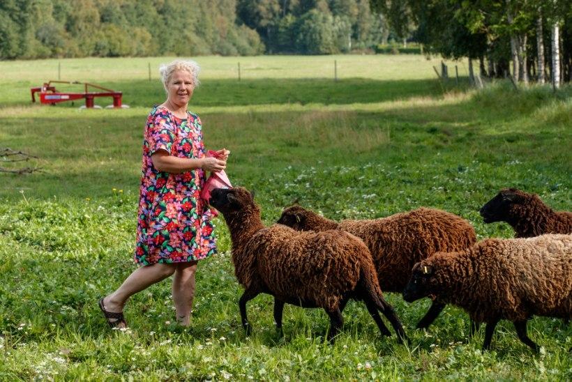 KODULUGU | Suurpere koduks on õdus taluhäärber