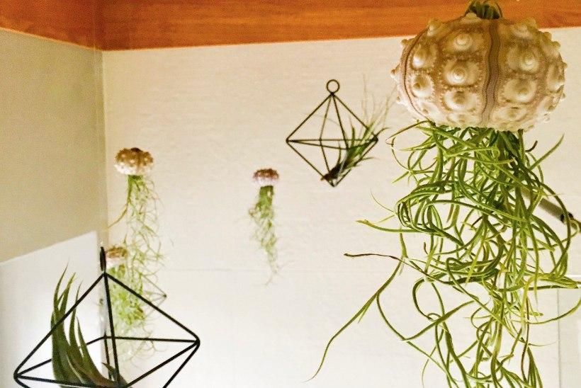 Kodu nagu ajakirjas: kümme põnevat viisi, kuidas kodus toataimi sättida