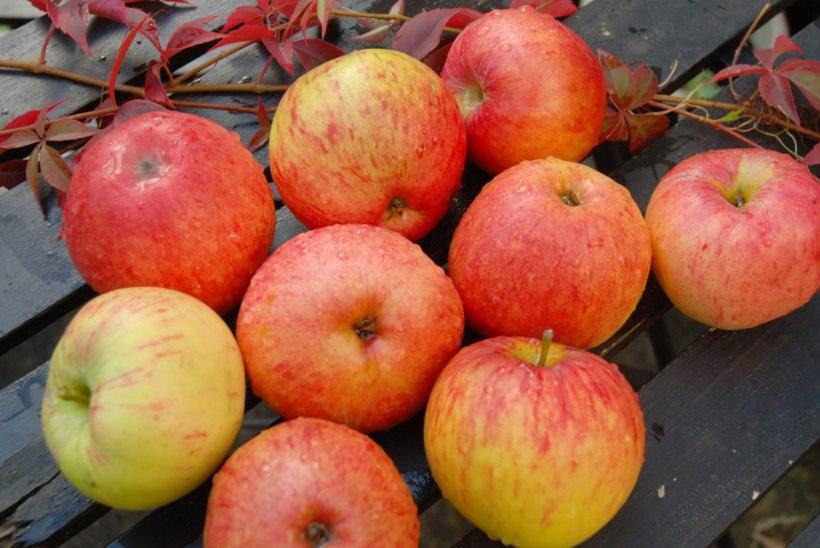 SÖÖ IGA PÄEV ÜKS VÕI ROHKEMGI: õunad aitavad eemal hoida neid haigusi!