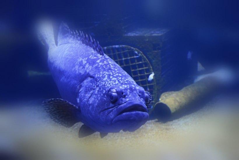 Austraalias üritas meetrine kala tappa kümneaastast poissi