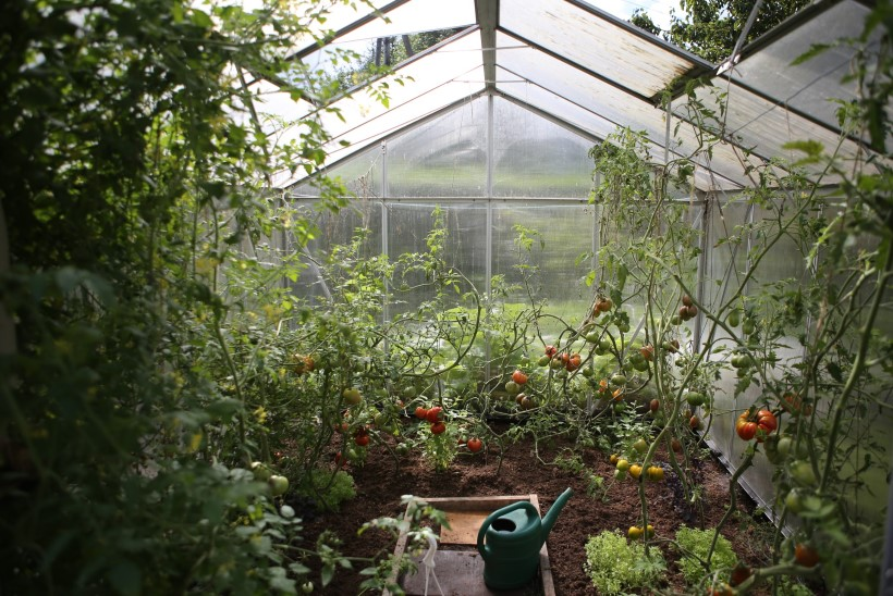Sügis kasvuhoones: viska taimed välja ja valmistu talveks