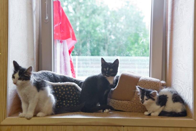 Suurbritannia loomaarst: Uus-Meremaal töötades pidin iga päev eutaneerima pesakonna kutsikaid või kassipoegi, sest neid ei olnud kuhugi panna