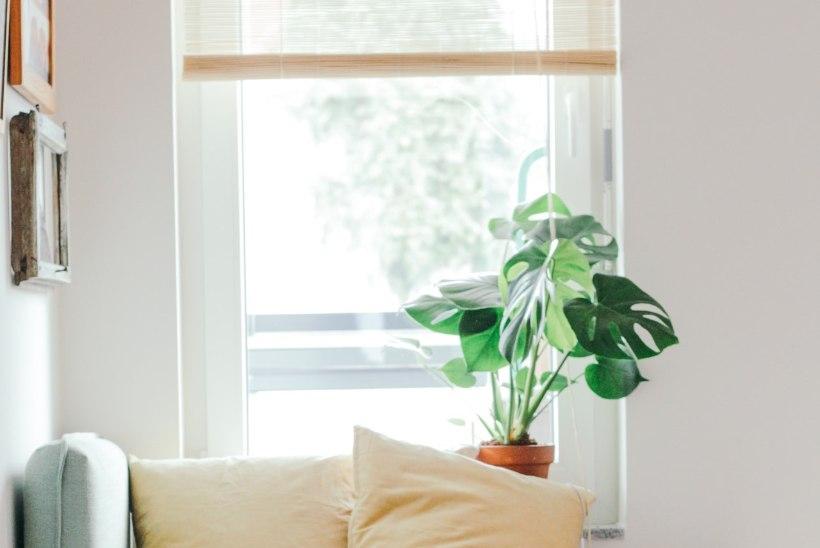 10 põhjust, miks mu kodus haiseb