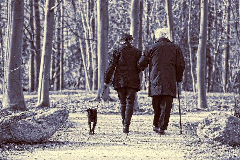 Tunned end üksildasena? 13 viisi, kuidas loomad tõstavad tuju ja teevad õnnelikumaks
