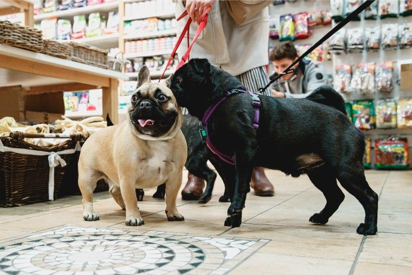 ÕL GALERII | NUNNUMEETER PÕHJAS! Tallinnas avati koertele mõeldud restoran