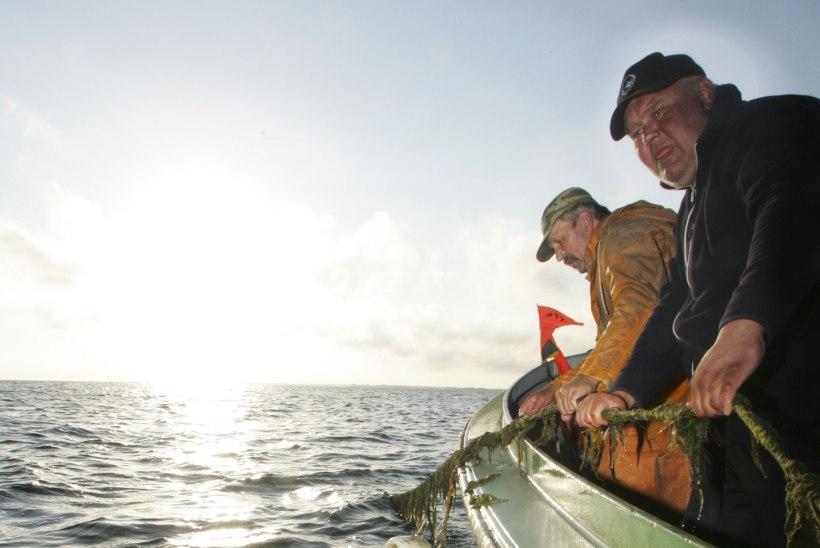 Inspektsioon hoiatab Peipsil mutnikuga kalapüügi tagajärgede eest