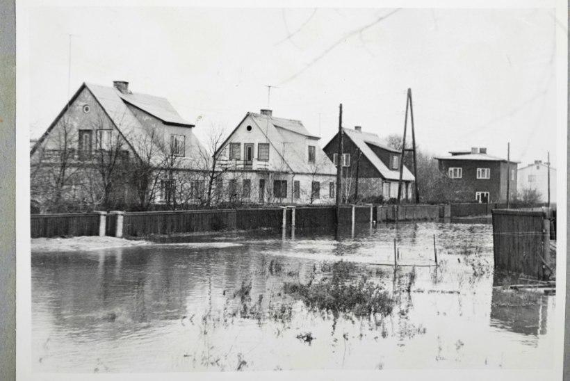 Tuulerekordiga torm: 50 aastat tagasi Lääne-Eesti saari räsinud maru hävitas terve kolhoosi