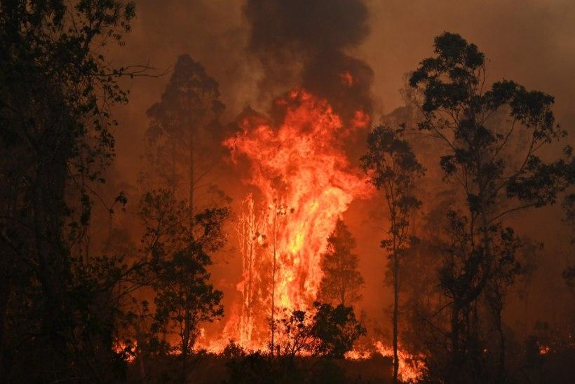 Kas kolm inimelu nõudnud metsatulekahjud neelavad ka Austraalia ralli?