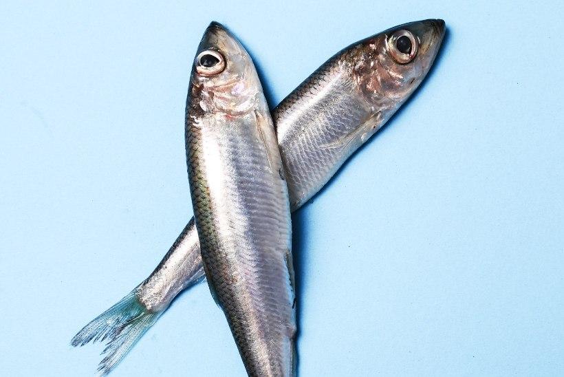VÄÄRT NÕU | Listeeriahirm ehk kuidas osta kala?