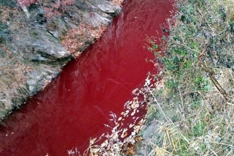Korea jõgi värvus seakatku tõttu veripunaseks