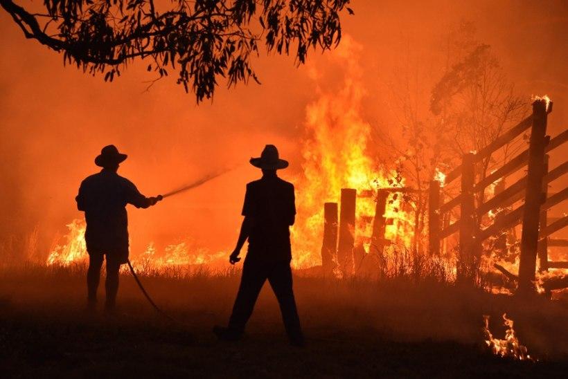 ÕILIS ŽEST! Ott Tänak tegi Austraalia metsapõlengutega võitlevatele tuletõrjujatele annetuse
