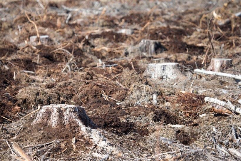 Hiiumaal varastati 94aastaselt naiselt mets, kahju üle 100 000 euro