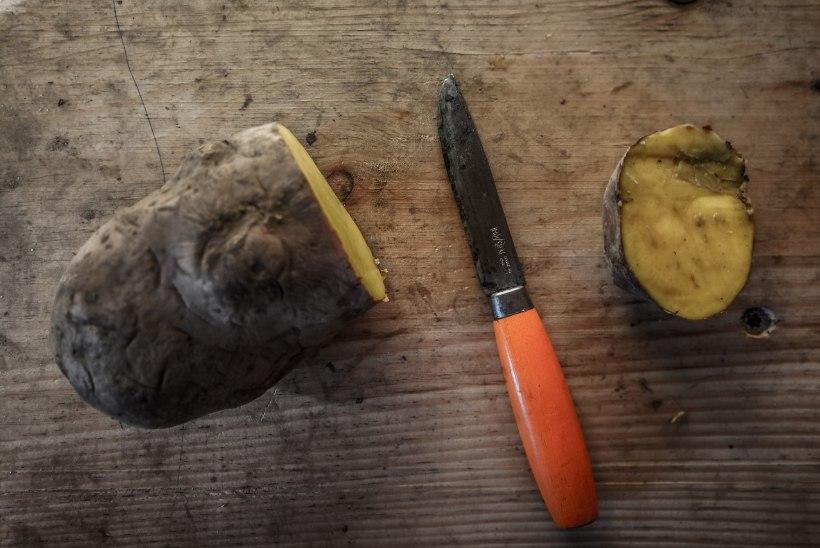VIDEO   Nuga roostest puhtaks kartuliga!