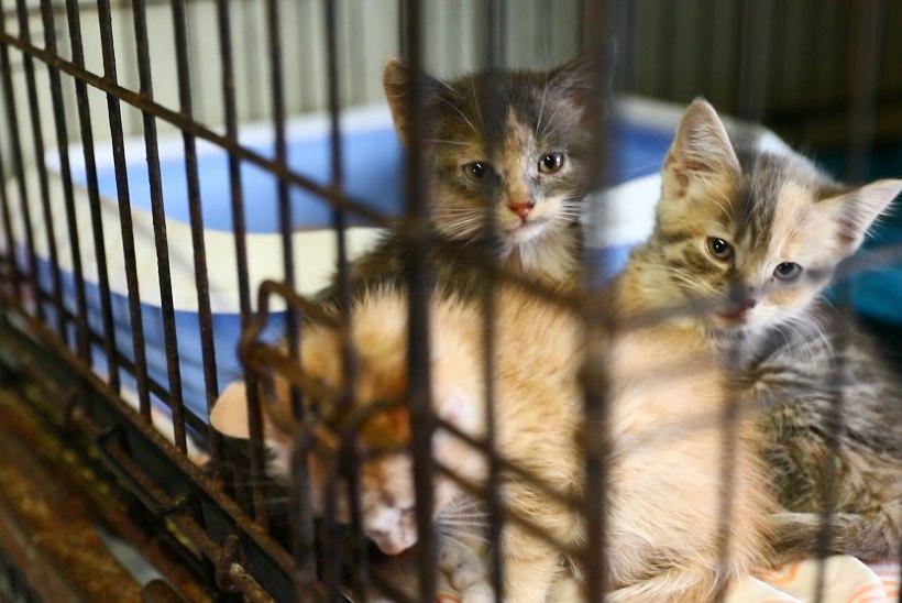 VIDEO | HUKKUNUD JA HUKATUD: aastas läheb ligi 20 tonni lemmikloomi jäätmetena hävitamisele