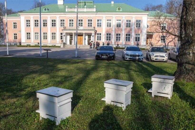 JÄRG ON MESILASTE KÄES: orjastatud mesimumme vägistatakse ja sandistatakse
