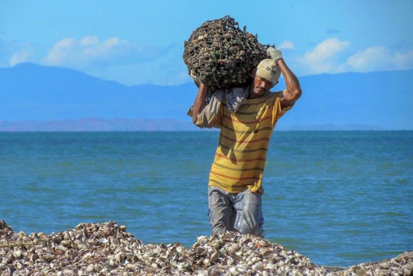 Teadlased: merest võiks saada kuus korda rohkem toitu kui praegu