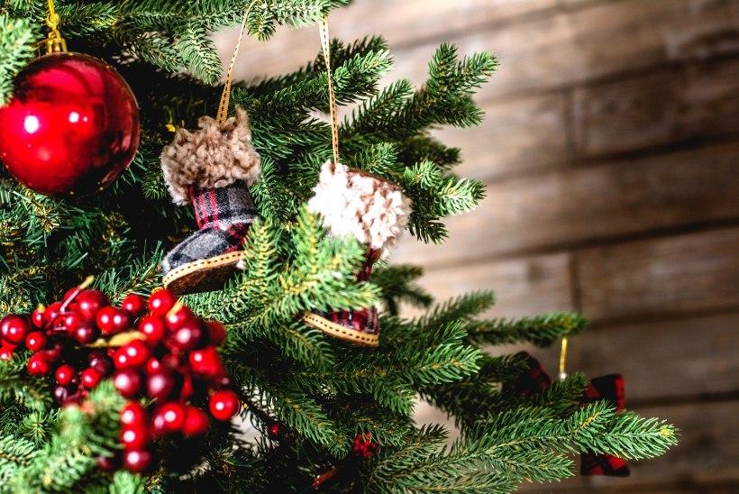 TASUB TEADA: nii püsib sinu jõulupuu kaunis ega aja okkaid!