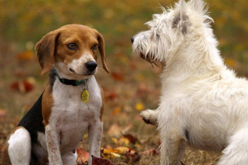 Lemmikute salakavalad kaaslased: mida teha, kui loomal on kirbud, lestad või ussid?