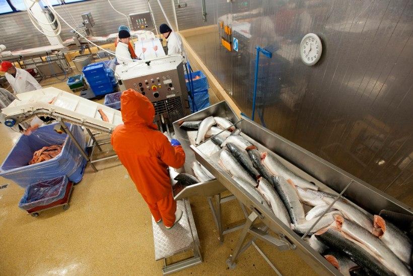 Toiduamet peatab tegevuse M.V.Wooli tehastes
