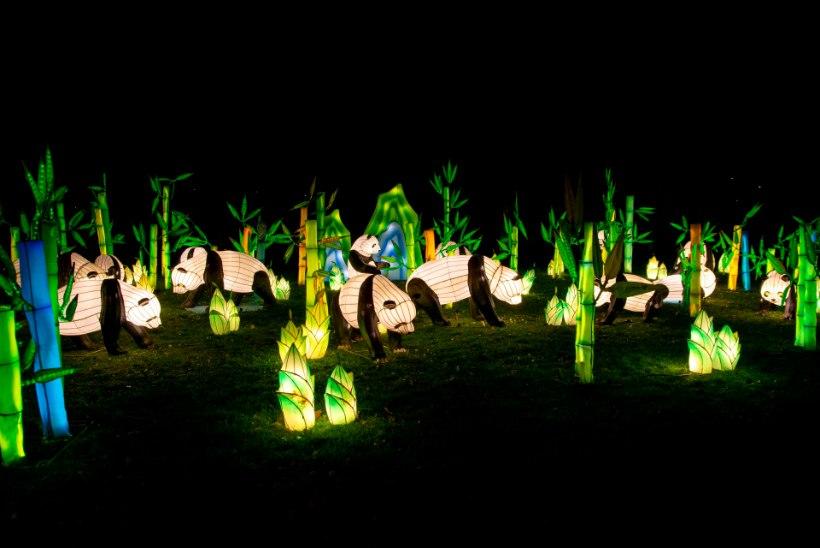 Pimedal ajal annab valgus inimestele juurde energiat ja tekitab head tuju! Lauluväljakul saab peagi näha 40-meetrist draakonit