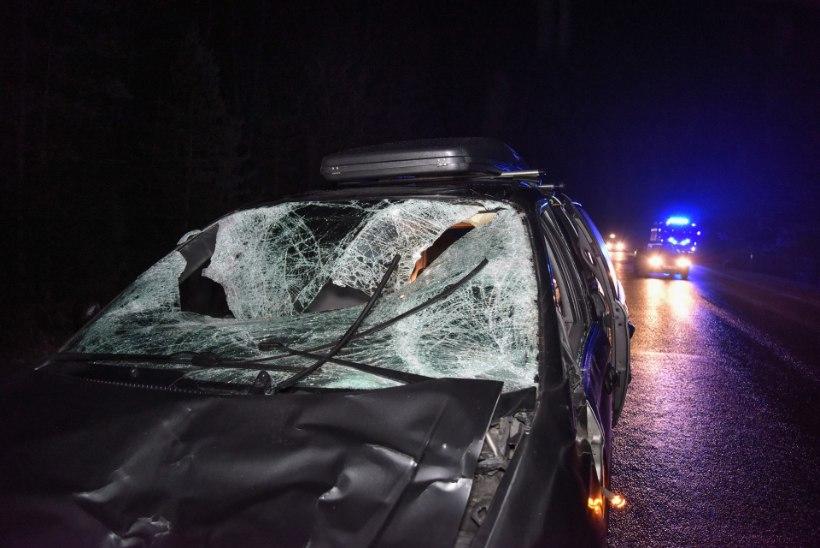 FOTOD   Autole ette jooksnud põder hukkus