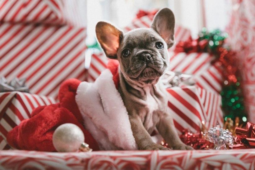 Ka lemmik tahab jõuludeks kinki! Valmista talle näiteks maitsvad küpsised!