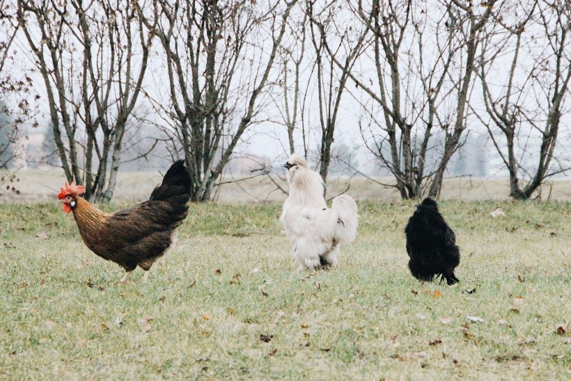 Tegus kanapere jätab pühadeks maaelu ja kolib Tartu Valguskülla