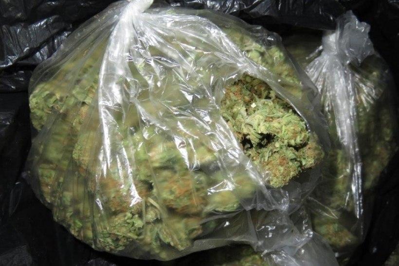 Kümmekond kilo marihuaanat Eestisse toonud välismaalased võeti vahele