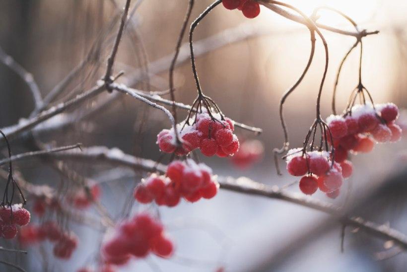 Detsembrikuu aiatööd: ajata lillesibulaid ja täiusta kevadisi plaane