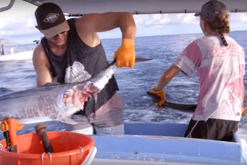 VIDEO | Austraalia kalurite ränk argipäev: võitlus haide ja mürgimeduusidega, haiglani 700 kilomeetrit
