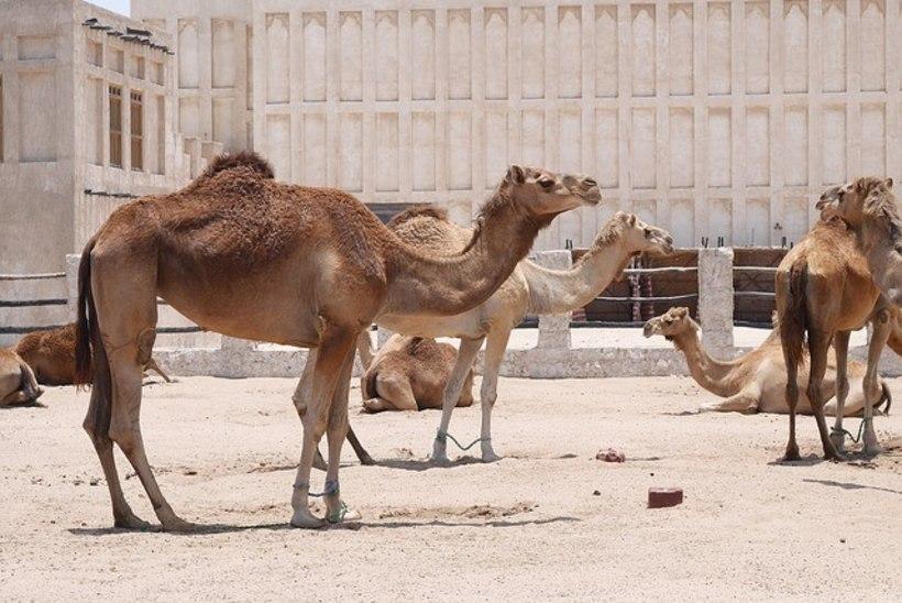 Kataris on nii kuum, et konditsioneerid paigaldati õue!