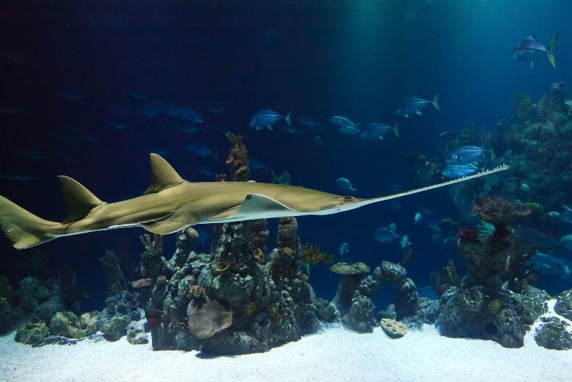 Saagkala surnukssaagijat ähvardab aasta vanglas