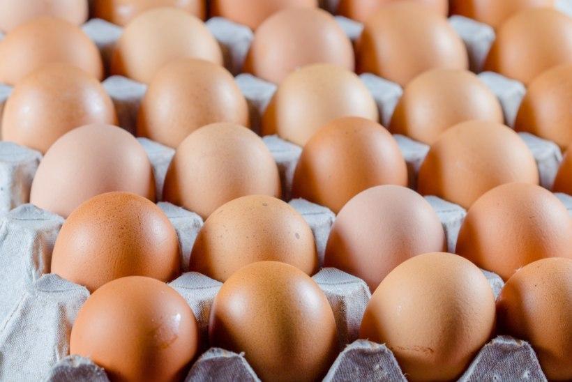 MÕRVARLIK KIHLVEDU: 50 keedumuna süüa lubanud mees suri 42. muna söömisel