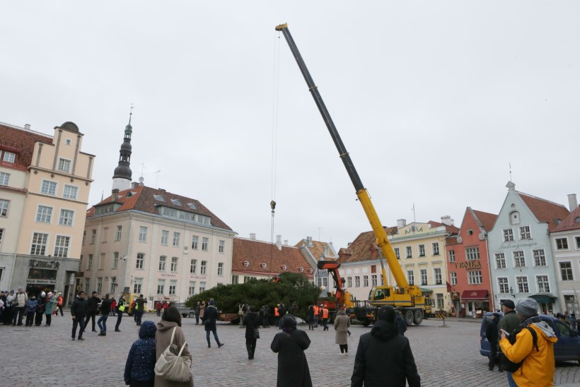 FOTOD | Tallinna selle aasta jõulukuusk jõudis Raekoja platsile