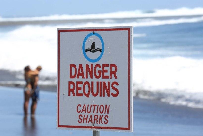 Hai kõhust tulid välja turisti käsi ja abielusõrmus